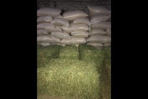 Compra - Venta Sin datos   fardos de alfalfa
